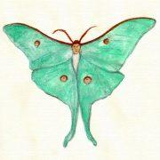 Papillon © Andreja Soleil