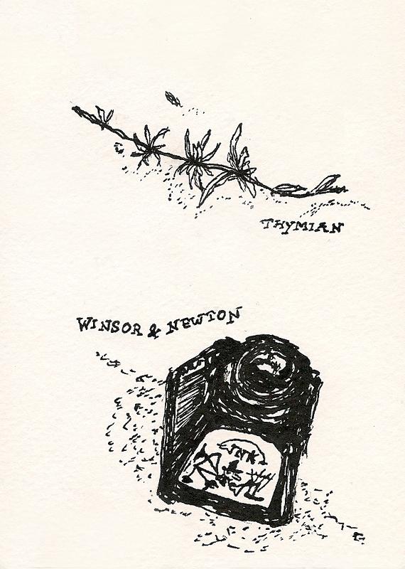 Spinnenfuß trifft Thymian