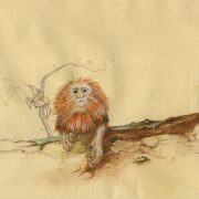 Golden Lion Tamarin. Illustration Andreja Soleil