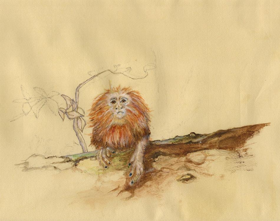 Golden Lion Tamarin. Illustration Andreja Soleil